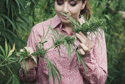 CBD Öl Frauch riecht Pflanze